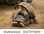 Stock photo mating tortoises at the zoo 1027375693