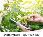 agriculture technology for food ... | Shutterstock . vector #1027425439