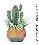 watercolor composition of cacti ... | Shutterstock . vector #1027434154