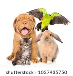 Stock photo group of pets together in front view 1027435750