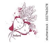 beetroots watercolor. hand... | Shutterstock .eps vector #1027462678