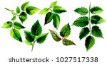 leaves of rose in a watercolor... | Shutterstock . vector #1027517338