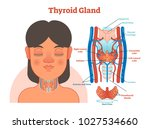 thyroid gland anatomical vector ... | Shutterstock .eps vector #1027534660