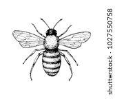 honey bee vintage vector... | Shutterstock .eps vector #1027550758