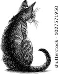 sketch of a sitting kitten | Shutterstock .eps vector #1027571950