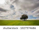 meadows of boil fresh green ... | Shutterstock . vector #1027574686