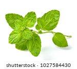 fresh scotch spearmint leaves... | Shutterstock . vector #1027584430