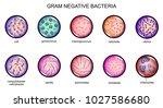 gram negative bacteria | Shutterstock .eps vector #1027586680