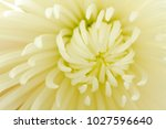 close up of inside of white... | Shutterstock . vector #1027596640
