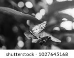 big yellow butterfly on the...   Shutterstock . vector #1027645168