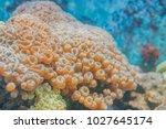 underwater corals sea anemone...   Shutterstock . vector #1027645174