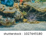 tube dwelling anemone ...   Shutterstock . vector #1027645180