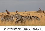 this is a picture a herd of... | Shutterstock . vector #1027656874