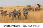 this is a picture a herd of... | Shutterstock . vector #1027656910