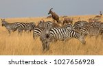this is a picture a herd of... | Shutterstock . vector #1027656928