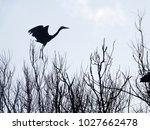grey heron  ardea cinerea ...   Shutterstock . vector #1027662478