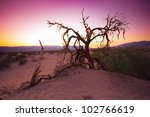 Eerie Bare Tree At Sunset In...