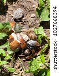 Small photo of crushed grape snail passing people, close-up photo, disgusting unpleasant appearance