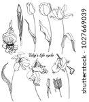 hand drawn outline botanical... | Shutterstock .eps vector #1027669039