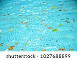 dirty pool water surface autumn ... | Shutterstock . vector #1027688899