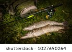 pike fish and spinning. | Shutterstock . vector #1027690264