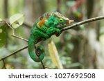 the common chameleon or... | Shutterstock . vector #1027692508