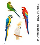Set Of Parrots Isolated On...