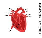 part of the human heart.... | Shutterstock . vector #1027734340