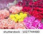 bouquets of multicolored  roses.... | Shutterstock . vector #1027744480