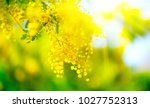 mimosa spring flowers easter... | Shutterstock . vector #1027752313