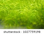 tropical aquatic plant in the... | Shutterstock . vector #1027759198
