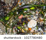 sea shells and seaweed... | Shutterstock . vector #1027780480