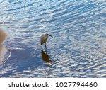 a beautiful graceful white...   Shutterstock . vector #1027794460