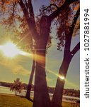 sun shining through trees in a... | Shutterstock . vector #1027881994