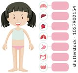 little girl and different parts ... | Shutterstock .eps vector #1027902154