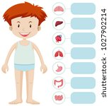 human boy and different organs... | Shutterstock .eps vector #1027902214