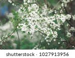 beautiful spring background... | Shutterstock . vector #1027913956