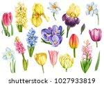 set of spring flowers ... | Shutterstock . vector #1027933819
