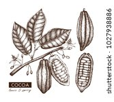 vector cocoa beans  leaves ... | Shutterstock .eps vector #1027938886