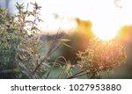 landscape is summer. green... | Shutterstock . vector #1027953880
