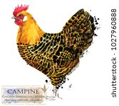 campine hen. poultry farming.... | Shutterstock . vector #1027960888