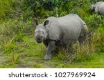 some rhinoceros  are roaming in ... | Shutterstock . vector #1027969924