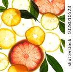 x ray citrus fruits | Shutterstock . vector #1028010523