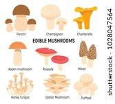 edible mushrooms set.... | Shutterstock .eps vector #1028047564