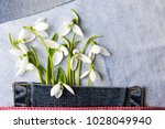 fresh snowdrops in a blue jeans ... | Shutterstock . vector #1028049940