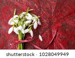 fresh snowdrops buquet on red... | Shutterstock . vector #1028049949
