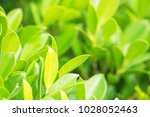 macro of tree leaves for nature ... | Shutterstock . vector #1028052463