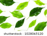 leaf isolated on white | Shutterstock . vector #1028065120