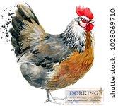 Dorking Hen. Poultry Farming....