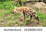 lovely spotted hyena | Shutterstock . vector #1028081434